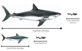 megalodon shark compared to killer whale. Perfect Whale Megalodon Shark Vs Killer Whale  Photo3 To Shark Compared Killer Whale T
