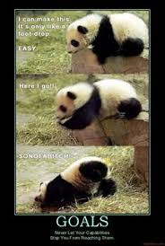 Quotes About Pandas Unique Pandaswhy The R Endangered Funny Pinterest Panda Animal
