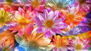 high definition flower wallpapers 1080p. Plain Wallpapers Standard  To High Definition Flower Wallpapers 1080p A