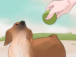 how to stop your dog from biting other people
