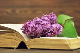 open old book and flower stock image image of anniversary 112434001