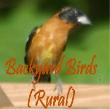 Pacific Northwest Birds Identification  In The Backyard Rufous Backyard Birds Pacific Northwest
