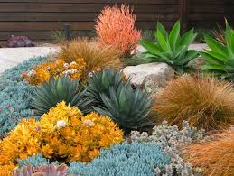 Small Picture Garden ideas landscape ideas Drought Tolerant Full Sun Part