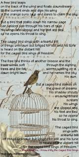 best the caged bird sings ideas bird poems   i know why the caged bird sings a angelou