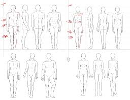 3 Drawing Anatomy Simple For Free Download On Ayoqq Cliparts