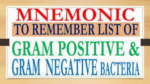 Gram Positive Antibiotics Chart Mnemonic To Remember List Of Gram Ve And Gram Ve Bacteria At Your Tip Of Tongue
