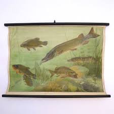 Pike Chart Antique Fish Vintage School Chart Pike By