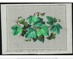 Berlin Wool Work Charts Woolwork4u 17 Best Images About Berlin Woolwork Foliage