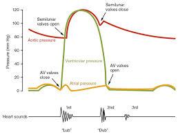 Heart Systolic And Diastolic Chart Cardiac Cycle Anatomy And Physiology Ii