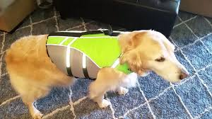 Vivaglory Size Chart Trying On Vivaglory Ripstop Sports Style Dog Life Jacket Large 80lb Golden Retriever