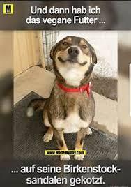 Liebe Zum Hund Sprüche