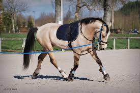 Resultado de imagem para dressage des chevaux