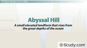 Types of Marine Organisms - Video & Lesson Transcript | Study.com