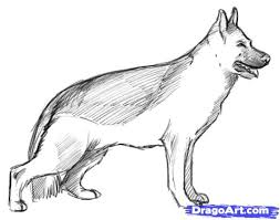 realistic dog drawing step by step. Brilliant Drawing How To Draw A Realistic Dog Real Step By  Inside Dog Drawing By Pinterest
