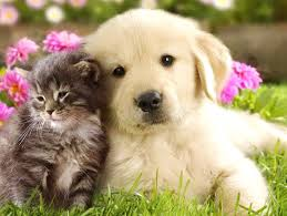 cute kittens and puppies wallpaper. Delighful Kittens Very Cute Puppy Wallpaper   Animal Wallpapers Cat Cute  Puppy Dog With Kittens And Puppies R