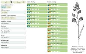 Grass Identification Chart Uk Key To Groups Of British Grasses Biodiversity Projects