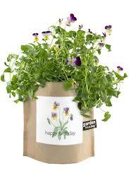 garden in a bag. Potting Shed Creations Garden-In-A-Bag - Front Cropped Image Garden In A Bag