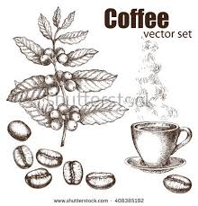 coffee bean plant illustration. Fine Coffee Hand Drawn Vintage Coffee Plant Elements For The Graphic Design Of  Menu Bars Intended Coffee Bean Plant Illustration