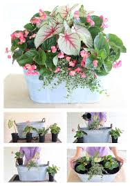 How To Grow Container Plants In Shade  Garden Inspiration Container Garden Shade Plants