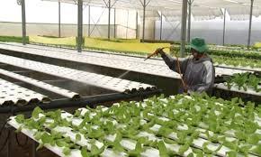 Đơn Dương phát triển sản xuất nông nghiệp thông minh