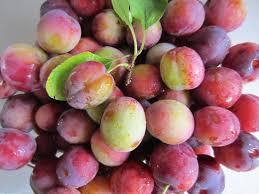 10 Self Pollinating Fruit Trees  Home N Gardening TipsPlum Fruit Tree Varieties