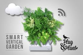plug plant is an easy to grow vertical garden