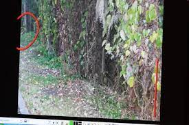 Among the evidence released friday is an animated movie showing the crime scene where caylee anthony was found. Pictures Caylee Anthony Crime Scene Photos Warning Graphic Images Baltimore Sun