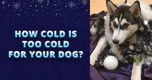 Also, adding blankets or dry straw in the structure can give the animal a place to bed down and keep warm. How Cold Is Too Cold For Your Dog Husky Advisor Signs And Tips