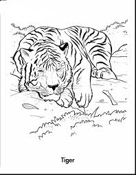 Small Picture Excellent adult tiger coloring pages printables with tiger