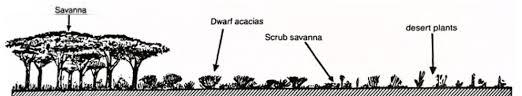 Savanna Climate Tropical Wet Dry Climate Pmf Ias