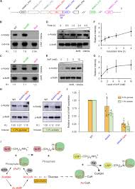 A Single Regulator Nrtr Controls Bacterial Nad Homeostasis