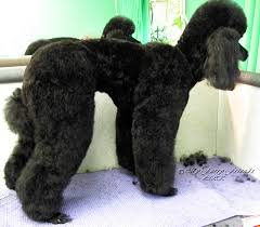 Pet Grooming The Good The Bad The Furry No Poodle Look