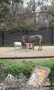 We and our partners process personal data such as ip address, unique id, browsing data for: Buin Zoo Picture Of Buin Zoo Tripadvisor
