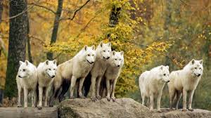 """Résultat de recherche d'images pour """"image nature animaux 3d"""""""