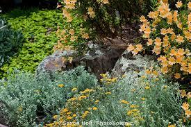 Small Picture California Native Plant Garden Design Garden ideas and garden design