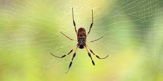 Usa Spider Bite Chart 7 Spider Bite Pictures And How To Treat Symptoms