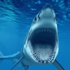 shark attack wallpaper. Beautiful Shark Shark Attack  Shark Wallpaper In 1024x1024 For Attack K