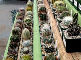 Small Picture Garden Design Garden Design with Cactus Info Growing indoor