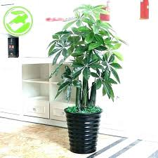 large fake plants artificial for living room indoor imposing exquisite outside planters is ther