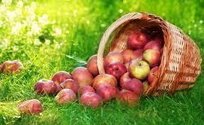 Fruits Wallpaper - Full Hd Apple Fruit ...