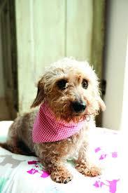 dog cooling collar diy this nice and easy free dog bandana sewing