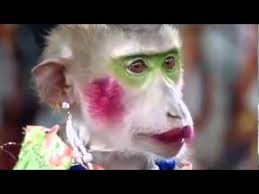 funny video funny clip funny make up monkey