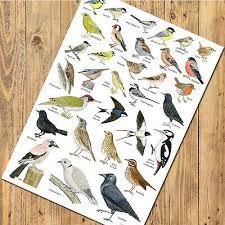 A3 British Garden Birds Identification Chart Wildlife Poster