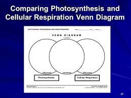 Venn Diagram Photosynthesis And Cellular Respiration Diagram Comparing Photosynthesis And Cellular Respiration