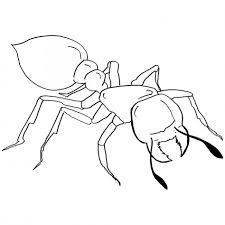 Ants Coloring Pages Page Animal Picnic Go Marching | Aksfm