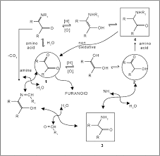 Review recent advances in the chemistry of strecker degradation and amadori rearrange ment implications to aroma and color for
