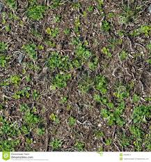 Soil With The Sprouted Grass Texture Seamless Stock Photo Image