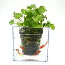 Ammonia In Fish Tank Nicodemus Co