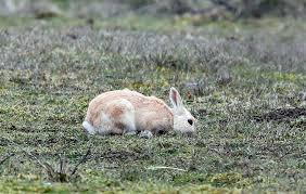 real sightings of the easter bunny. Perfect Bunny We Are Unsure Why This Is Different Perhaps A Product Of Wild Rabbit  Breeding With An Escaped Domesticated One For Real Sightings Of The Easter Bunny T