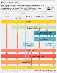 Honey Processing Flow Chart Coffee Processing Flowchart Another Coffee Infographic
